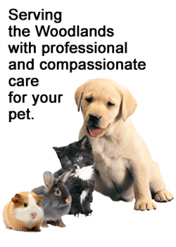 Serving the Woodlands with professional and compassionate vet care for your pet.